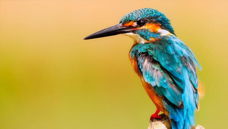 Los animales no logran adaptarse a la velocidad del cambio climático