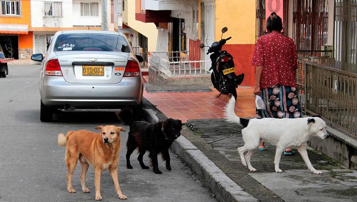 Mascotaxi: inclusión de las  mascotas en el transporte público