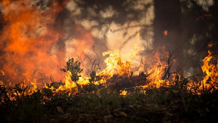 2019: Cerca de 1.000 hectáreas de bosques consumidas por incendios en Colombia
