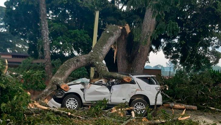 En coma inducido, conductor de camioneta sobre la que cayó un árbol