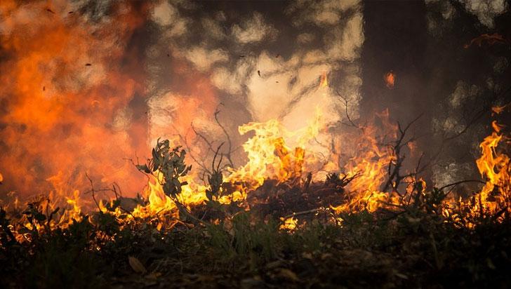 120.000 hectáreas de bosques han consumido este año por incendios en el país