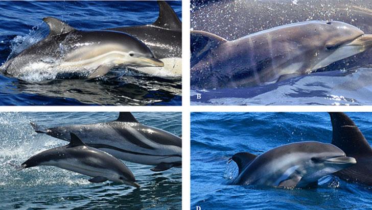 El primero en el mundo: un delfín 'híbrido' acaba de nacer en altamar