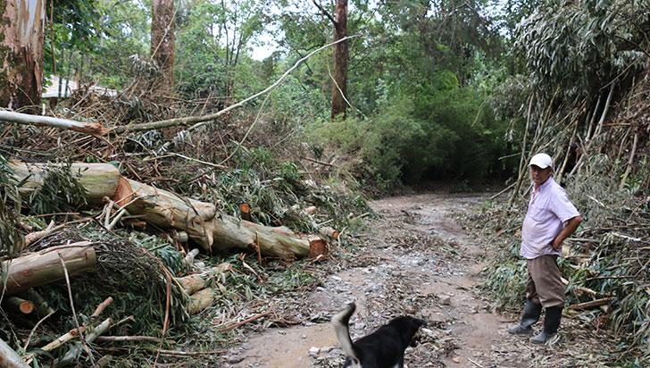 Vía a vereda San Juan,  taponada por tala de árboles