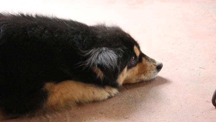 Tras polémica sobre posible maltrato animal, radican solicitud de visita