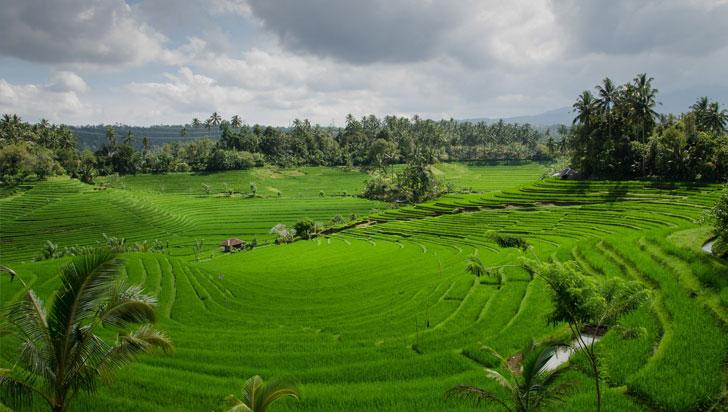 El cambio climático influirá en reducir la producción en zonas arroceras