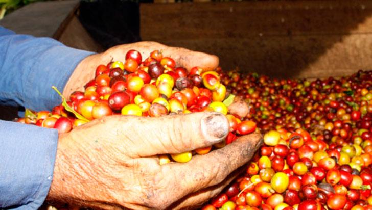 Cuatro marcas de agroalimentos del Quindío buscarán negocios en China