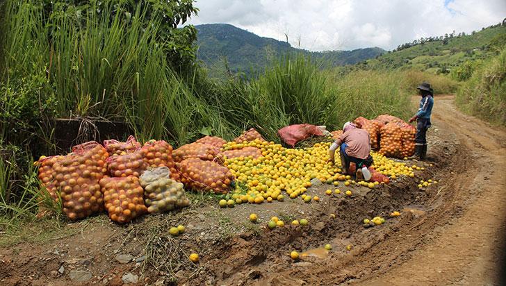 Quindío debe aprovechar la producción de frutas, café y el potencial exportador