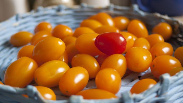 Martha Orozco, científica colombiana que diseña tomates minúsculos para Nasa