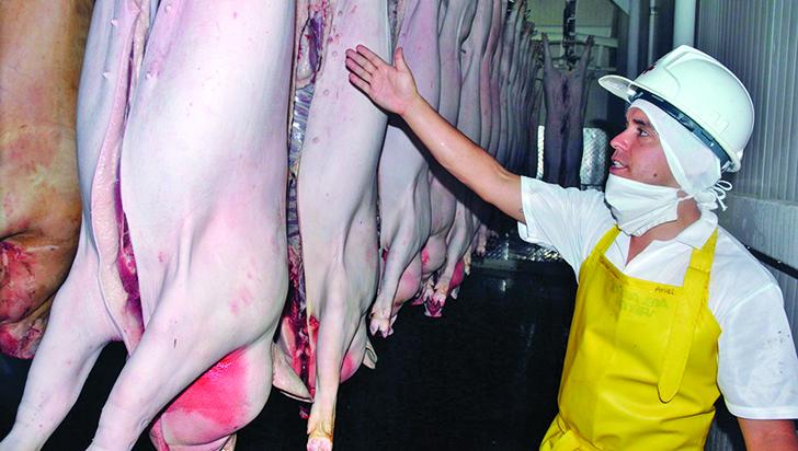 """""""No se debe incentivar el sacrificio de cerdos en vía pública durante Navidad"""": secretario de Salud del Quindío"""