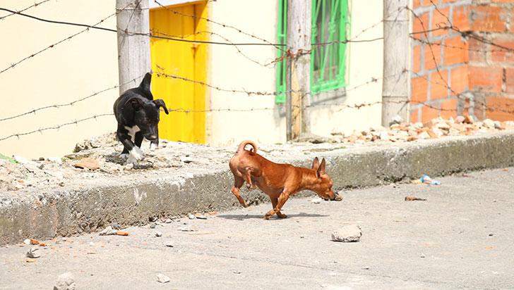 Con perro que murió este lunes, ya son 14 los animales envenenados