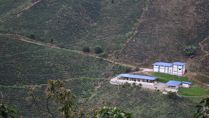 En 2019, Quindío recuperó 2,5 % de las hectáreas perdidas de café