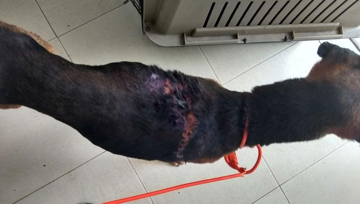 Un canino terminó lesionado con agua hirviendo en el barrio Las Colinas