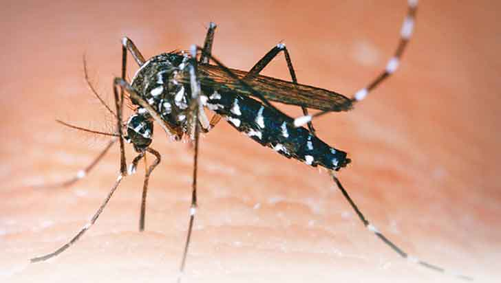 194 casos de dengue se registraron antes de finalizar el 2019