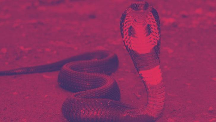 El coronavirus chino resultó ser un híbrido de virus de serpiente y murciélago