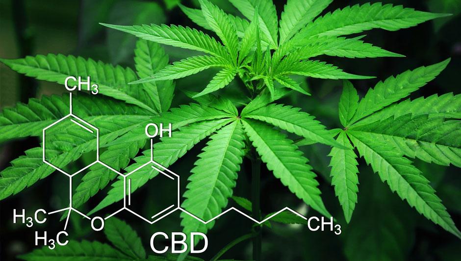El cannabis medicinal abre nuevas oportunidades a la economía del país