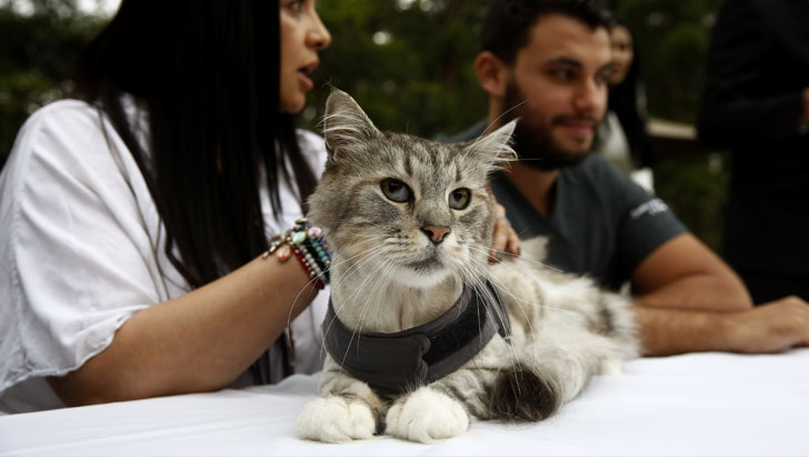 Implantan por primera vez en Colombia un marcapasos a un gato