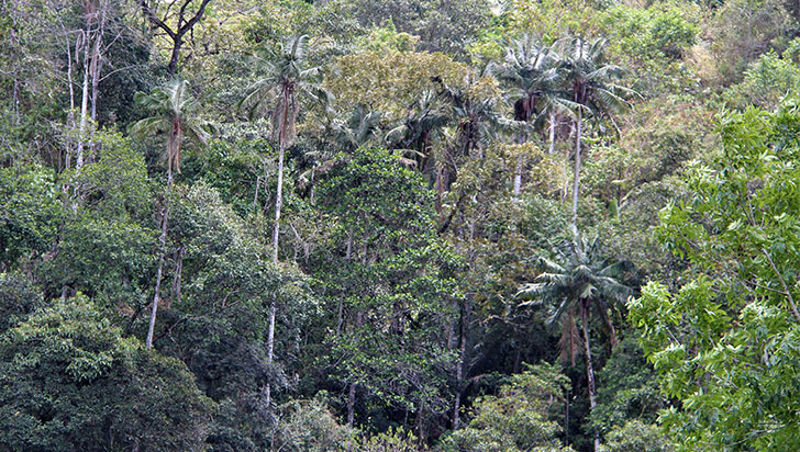 """""""Actividades de reforestación deben ser ejecutadas con asesoría"""": CRQ"""
