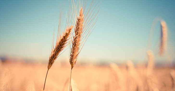 El aumento atmosférico de CO2 perjudicará nuestra dieta