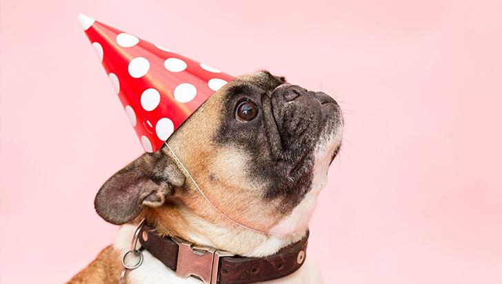 Humanización de las mascotas: opiniones encontradas