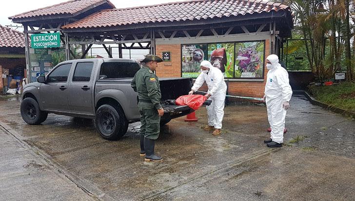 Autoridades investigan responsable de asesinar a felino en Salento