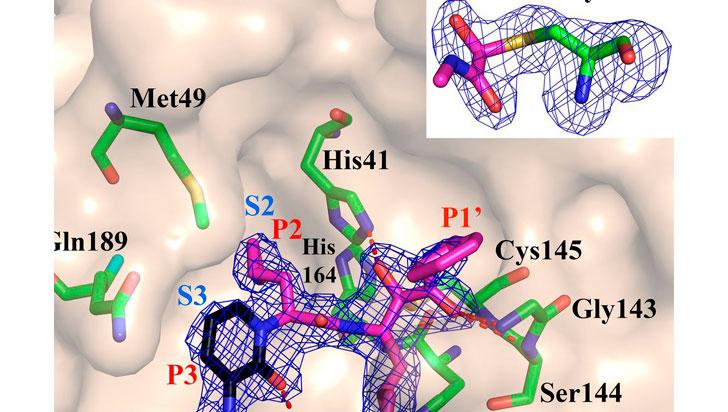Nuevo compuesto químico bloquea la capacidad de replicación del coronavirus
