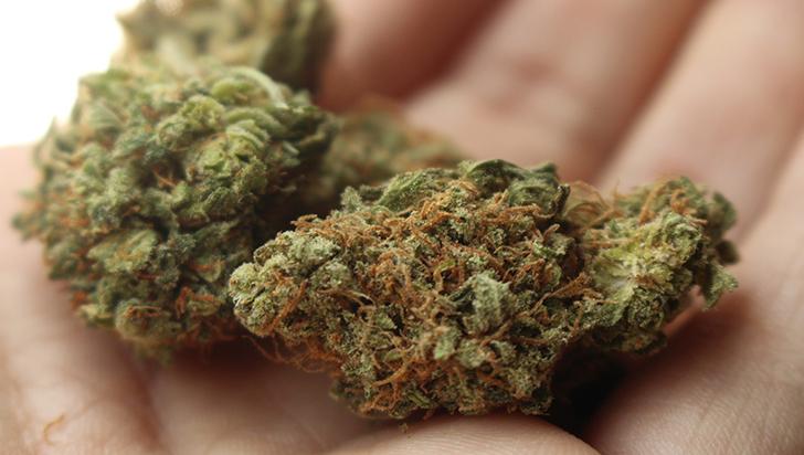 """El cannabis, """"esencial"""" en tiempos de pandemia en EE.UU."""