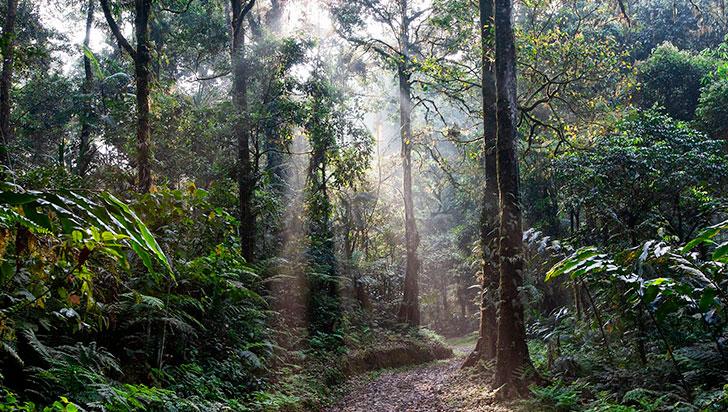 Ancestros humanos de dos millones de años aún trepaban a los árboles