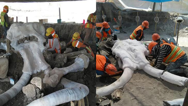 México: encuentran los restos de 60 mamuts en un aeropuerto en construcción