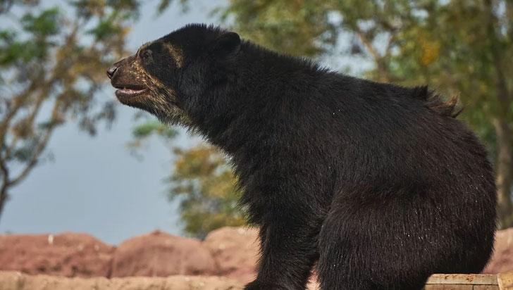 Un estudio alerta de la creciente extinción de los animales vertebrados