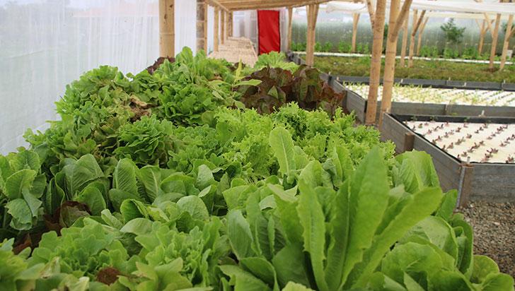 En Quindío se 'cultiva' tendencia a la  agricultura urbana y la producción limpia