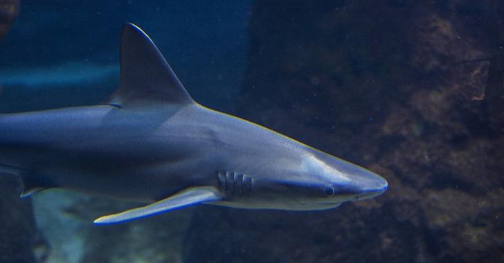 Un niño de Florida recibe diecinueve puntos por ataque de tiburón