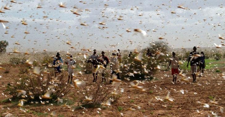 Argentina combate la plaga de langostas con fumigaciones aéreas y terrestres