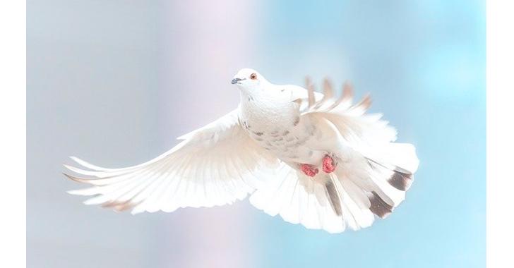 La paz y la seguridad, también amenazadas por la pandemia, según la ONU