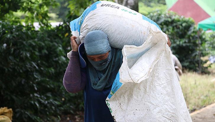Producción de café cayó 3 % en agosto; Quindío tuvo graneos