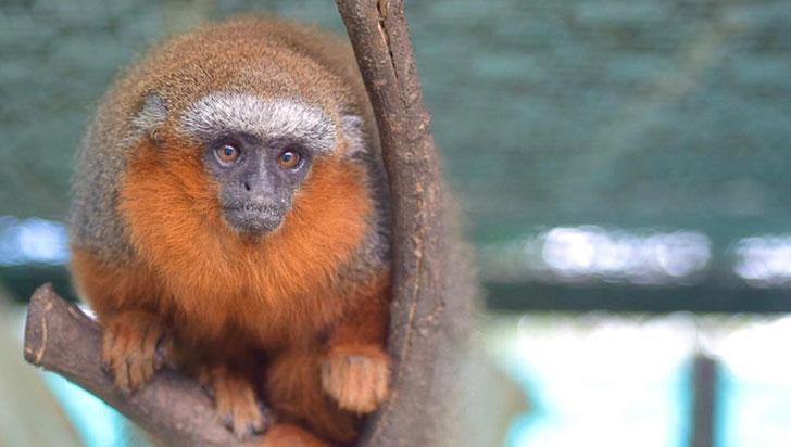 La CRQ recuperó 64 especies de fauna silvestre