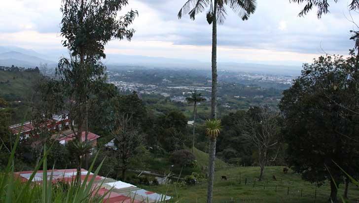 Con venta de más de 12.000 árboles, Jardín Botánico busca mitigar crisis