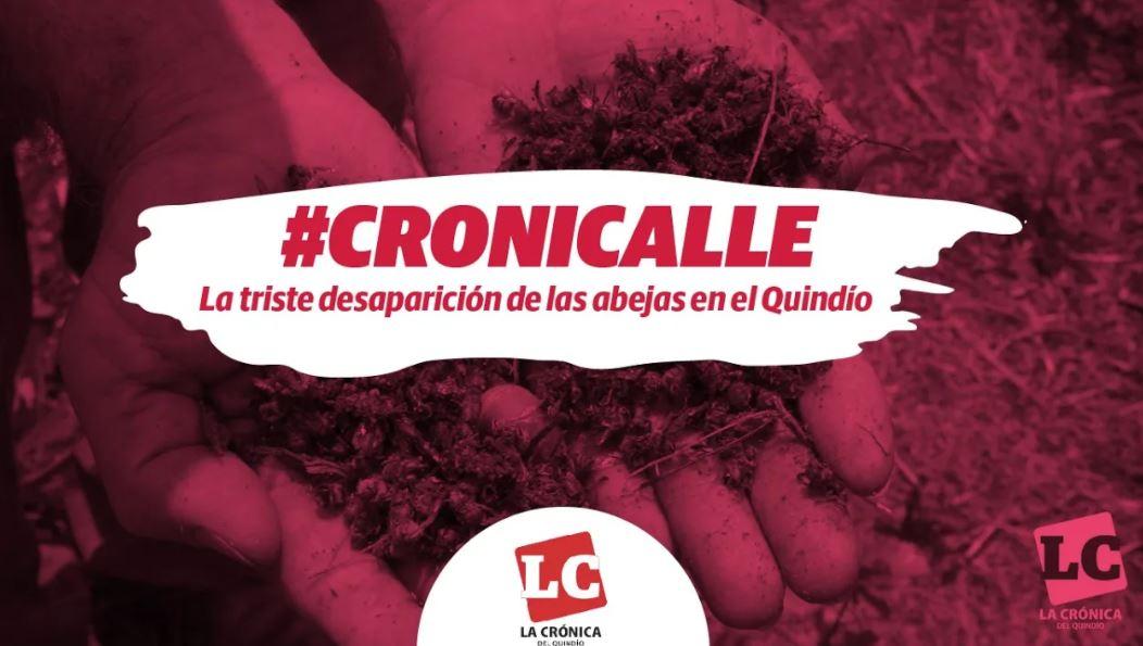 #Cronicalle   La triste desaparición de las abejas en el Quindío