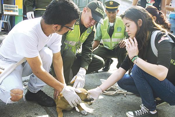 Más de 35 animales callejeros de Armenia recibieron cuidados
