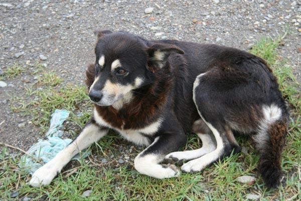 Vuelve la eutanasia para perros y gatos abandonados