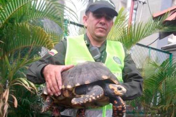 Recuperados por la Policía Quindío animales silvestres en cautiverio