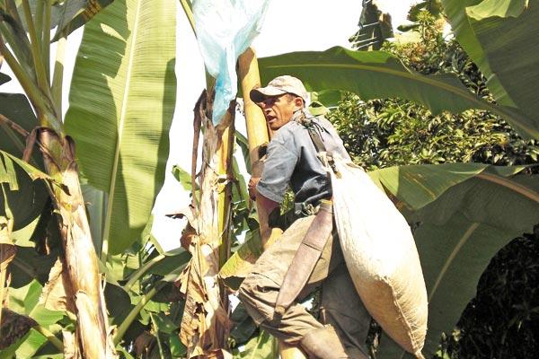 Campaña busca recolectar bolsas de plátano en Filandia