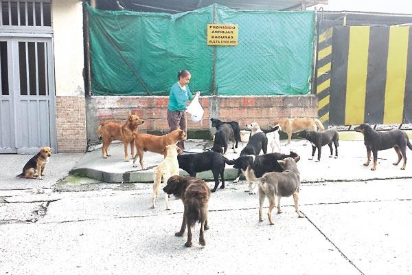 A rescatar y alimentar animales dedica su vida