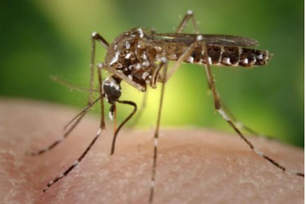 el-virus-chikungua-ya-deja-21-muertos-y-4756-infectados-en-latinoamrica