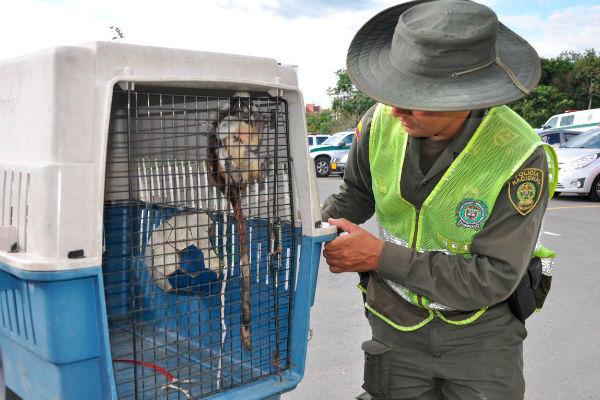 Autoridades emprendieron campaña contra el tráfico de la flora y la fauna en el Quindío