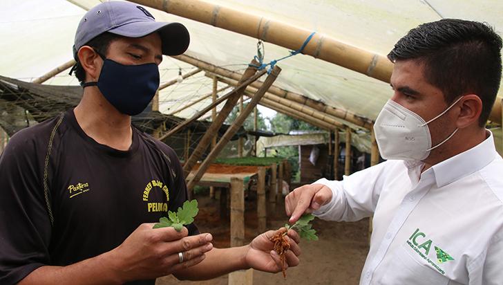 Floricultura, un negocio que renace después de la crisis de la pandemia