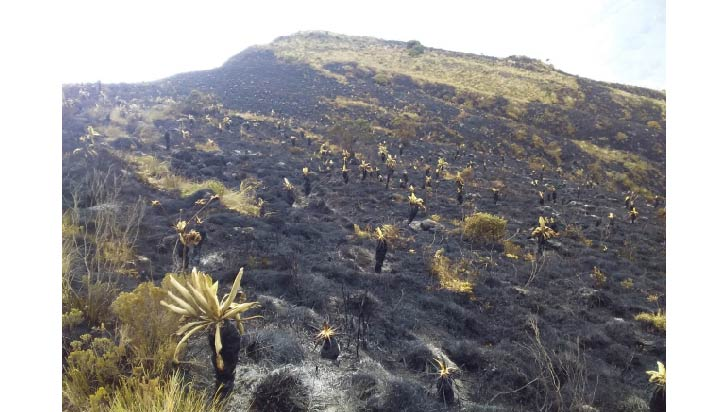 Controlan incendio que arrasó 800 hectáreas en páramo colombiano Santurbán
