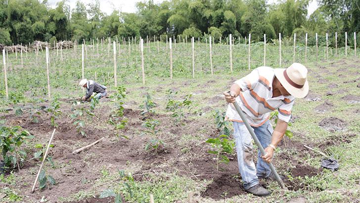 comunidad-andina-traza-una-hoja-de-ruta-para-reactivar-comercio-agropecuario