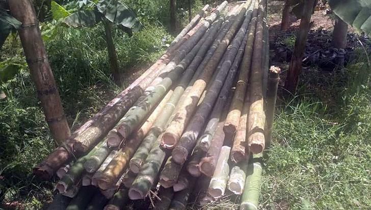 67 denuncias en el Quindío por afectación ambiental