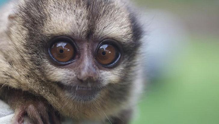 En pocos días estará listo  el plan de manejo y conservación del mono nocturno