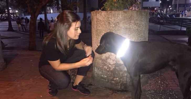 Con collares reflectivos, dos fundaciones buscan evitar que caninos callejeros sean atropellados